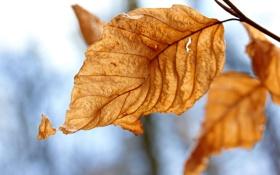 Картинка осень, листья, макро, природа, жёлтый, фото, листок