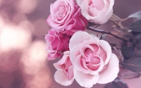 Картинка макро, цветы, настроение