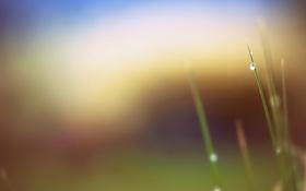 Картинка трава, капли, макро, роса, фон, розмытие
