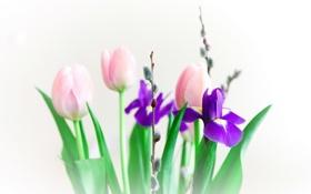 Обои природа, фон, цветы