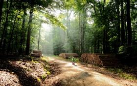 Обои дорога, лес, деревья, природа, велосипед, фото, ребенок