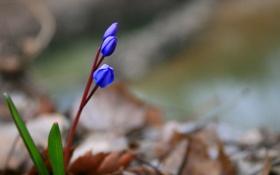 Обои листья, цветы, стебли, размытость, синие