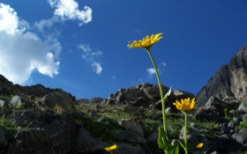Обои небо, цветы, камни, растения