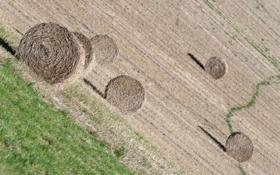 Обои поле, природа, сено
