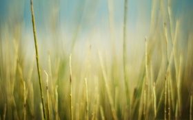 Картинка поле, трава, макро, природа, фото, фон, обои