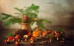 Обои грибы, шишка, маслята, лесной, ель, натюрморт
