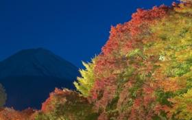 Картинка осень, небо, листья, свет, деревья, ночь, гора