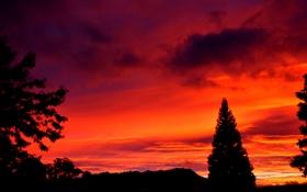 Обои небо, облака, деревья, силуэт, зарево