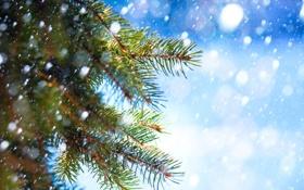 Картинка снег, иголки, ветки, ель, хвоя, снегопад