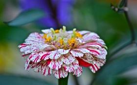 Картинка макро, лепестки, сад, стебель