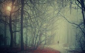Картинка пейзаж, туман, парк