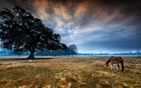 Обои landscape, tree, horse, morning