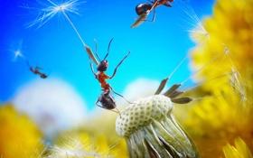 Обои цветок, небо, одуванчик, семена, пух, муравей, парашют