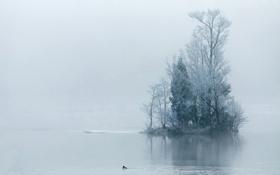 Картинка деревья, пейзаж, природа, туман, озеро, утро
