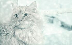 Картинка кошка, усы, взгляд, снег