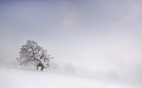 Обои зима, снег, поле, туман, дерево