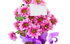 Обои букет, лепестки, цветы
