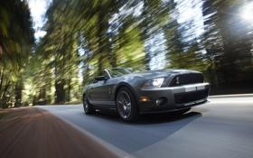 Обои дорога, лес, лето, класс, автомобиль, ford shelby gt500 2010