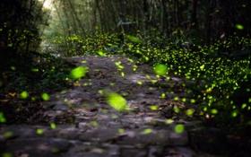 Обои лес, свет, парк, дорожка, блик, тропинка