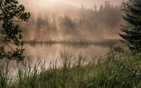 Обои лес, трава, деревья, туман, озеро, камыши, рассвет