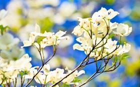 Картинка небо, лепестки, ветка, цветы