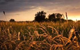 Картинка трава, капли, свет, природа
