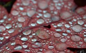 Картинка осень, вода, макро, красный, роса, листок, близко