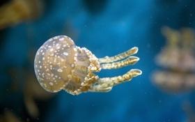Картинка подводный мир, вода, макро, медуза