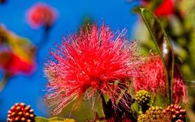 Картинка цветок, небо, природа, экзотика