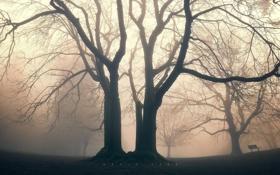 Картинка сквер, парк, деревья, природа, туман