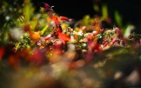 Обои макро, лучи, свет, цветы, природа, фото, фон