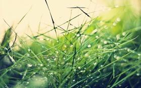 Обои трава, капли, grass, drops