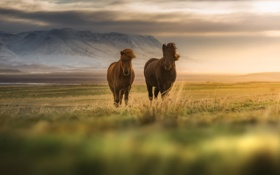 Картинка поле, животные, природа, лошади