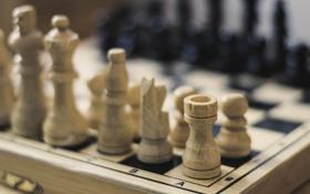Обои игра, шахматы, доска, фигуры