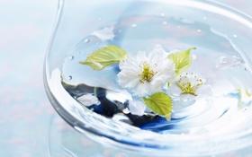 Обои листья, цветок, Light, капли, лепестки, стекло, ваза