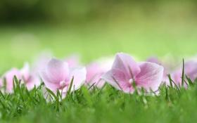 Картинка растения, трава, природа, цветы