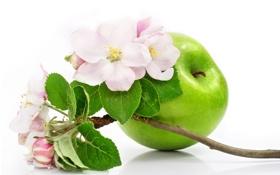 Обои ветка яблони, яблоко, цветы