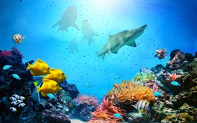 Обои рыбки, акулы, подводный мир, underwater, ocean, fishes, tropical