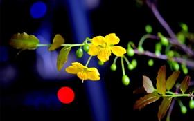 Обои стебель, цветок, свет, ветка, блик