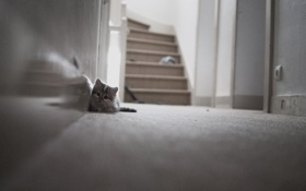 Обои глаза, кот, отражение, зеркало, лестницы, стенка, прихожая