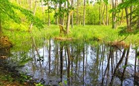 Картинка лес, трава, вода, деревья, заросли, болото
