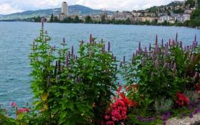 Картинка город, набережная, Женева, озеро, цветы, Швейцария, Geneva
