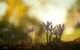 Картинка макро, цветы, природа