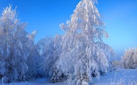 Обои зима, снег, природа, фото
