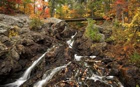 Картинка лес, осень, Канада, скалы, ручей, Онтарио, деревья