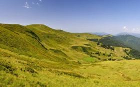 Картинка трава, пейзаж, горы, природа, Украина, Карпаты