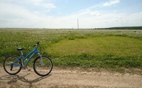 Картинка дорога, поле, лето, небо, трава, велосипед, одуванчики