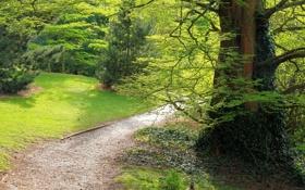 Обои лес, деревья, ветки, ствол, тропинка, плющ