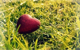 Картинка сердце, макро, обои, трава, фото
