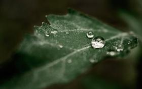 Обои роса, капля, зеленый, лист, макро, листок